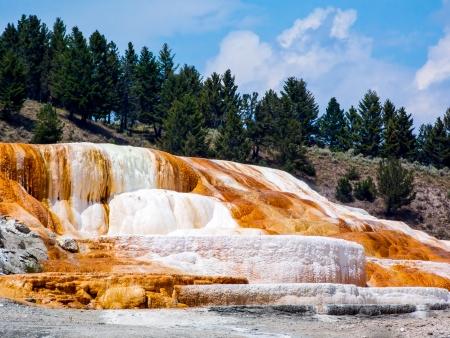 Mammoth Hot Springs of Yellowstone photo
