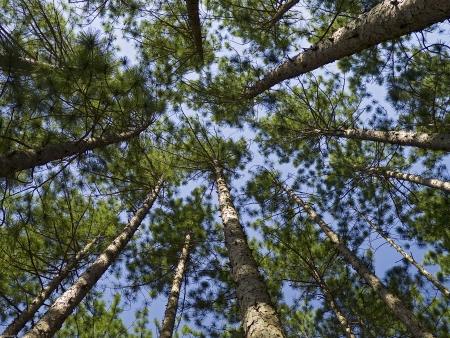 침엽수 숲 스톡 콘텐츠