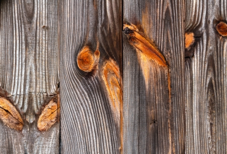 Weathered wood siding on an old building shows beautiful wood grain and colorful knots  photo