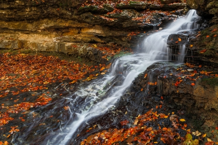 vividly: Whitewater cascades down rock ledges of a small waterfall with vividly colorful autumn leaves all around  Shot near the dam at Cagle