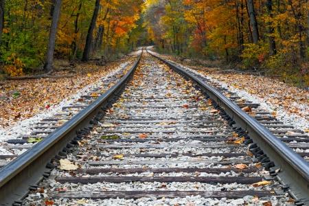 Shiny steel railroad tracks lead the eye trough trees with vivid fall colors  photo