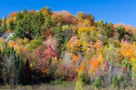 A rocky hillside is ablaze in vibrant fall colors with a deep blue sky above  Photogrpahed in a remote area of Michigan photo