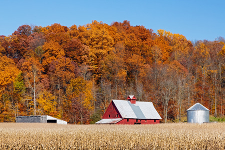 Farm land with a crop of corn and a bright red barn is backed by a hillside full of trees with vibrant and colorful autumn foliage