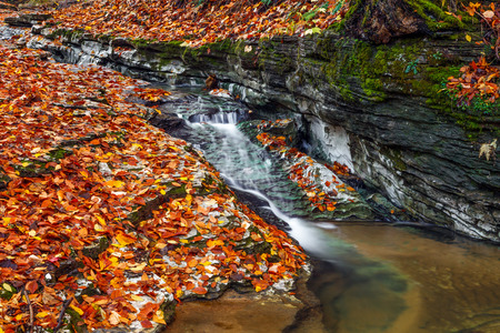 vividly: A small stream cuts through limestone with vividly colorful fall leaves all around  Photographed near Cagle