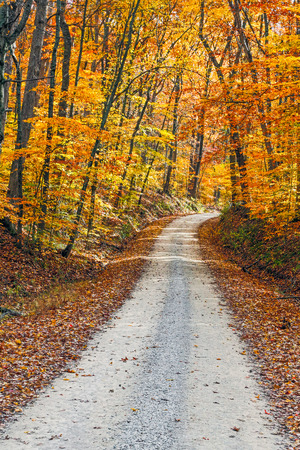 intensely: An unpaved gravel road winds through a forest with intensely colorful fall foliage Stock Photo