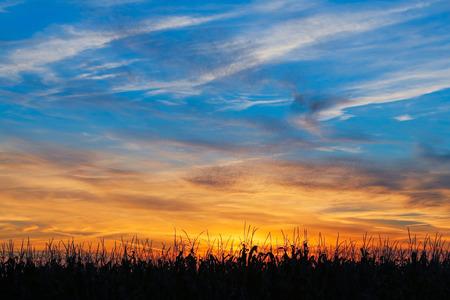 인디애나 옥수수 밭은 다채로운 일몰 하늘에 의해 윤곽을 나타냅니다