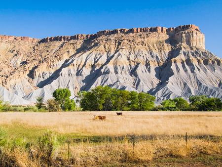 badlands: Cattle graze before shale and sandstone hills in the badlands of south central Utah