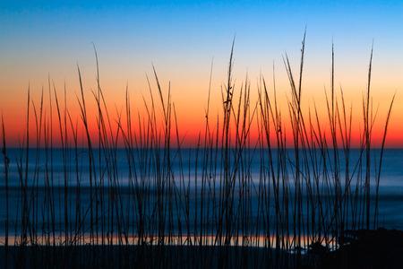 모래 언덕 잔디 워싱턴 오크 주립 공원, 플로리다에서 대서양을 통해 다채로운 동트기 하늘에 의해 윤곽을