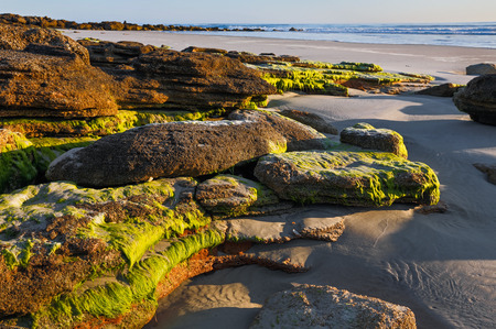 Photographed in early morning light, a sandy Atlantic Ocean beach south of St  Augustine, Florida features a natural coquina stone outcropping  photo