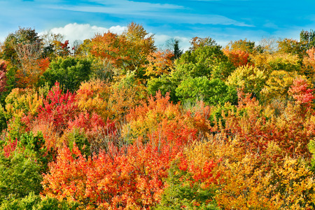 greatly: A vivid and greatly varied display of fall foliage color is seen from atop the Cut River Bridge in Michigan