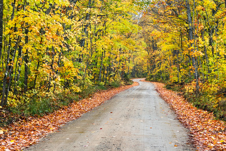 alger: A dirt road winds through an autumn landscape on a cloudy October day. Stock Photo