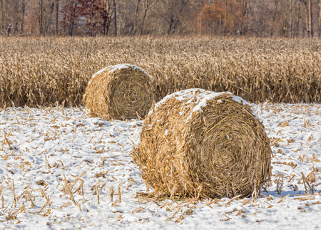 Round crop bales on the edge of a corn field are topped with a light snow fall in late autumn. photo