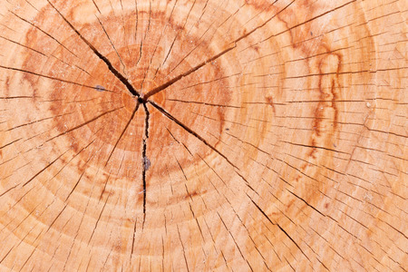 sawed: A fresly cut log displays tree growth rings, cracks and sawdust. Stock Photo
