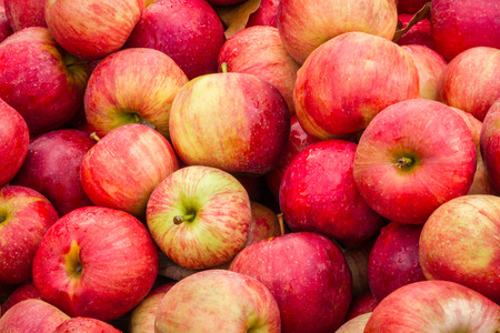 heap up: Apples fill a bin at an orchard market at harvest time.