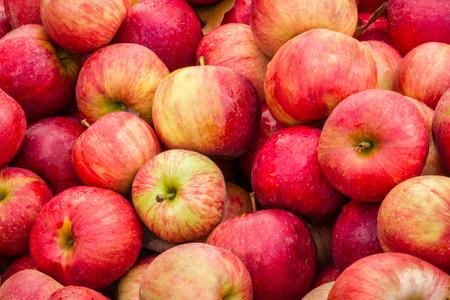 manzana: Manzanas llenan un contenedor en un mercado al huerto durante la cosecha. Foto de archivo