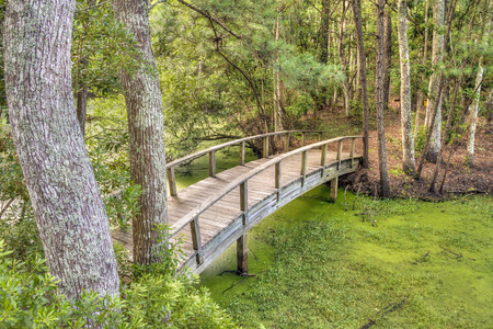 Footbridge: A wooden footbridge crosses the swamp in coastal North Carolinas Nags Head Wood.