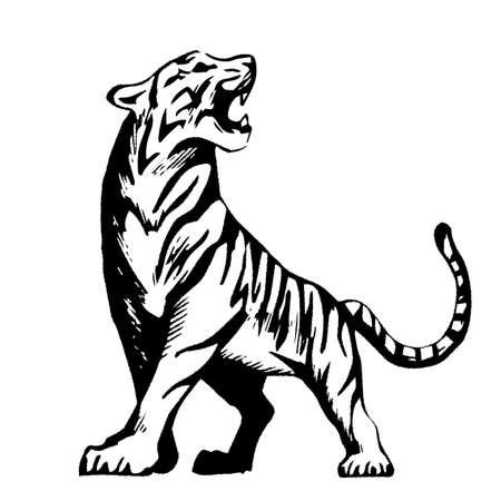 Vector illustration: tiger, tiger, line art material
