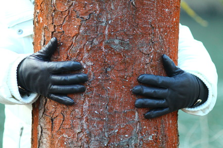 Woman hands with black leather gloves hugging trunk of the horse chestnut tree.