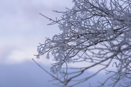 wintering: Freezing