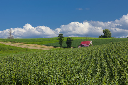 areas: Agricultural areas Stock Photo