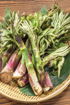 edible: Edible wild plants