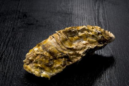 norovirus: Oyster