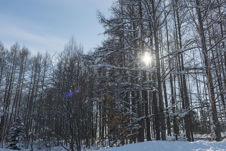 wintering: winter