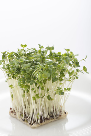 Broccoli Sprout 写真素材