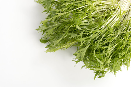 brassica: Brassica rapa leaf