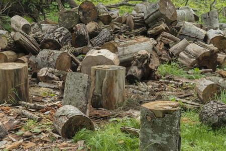 retardant: firewood