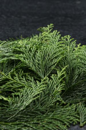 Japanese cypress dish