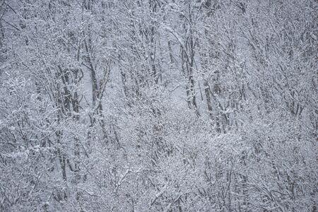 Cold winter snow scene Reklamní fotografie