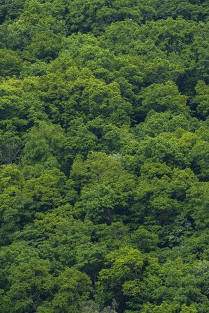 Mountain forest and beautiful trees