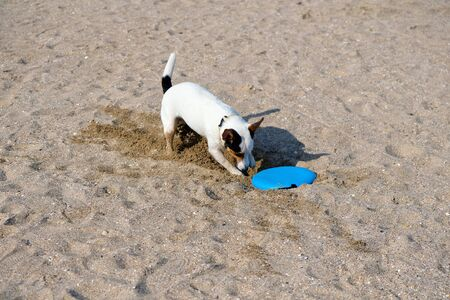 Dog playing with flying disk at sea beach