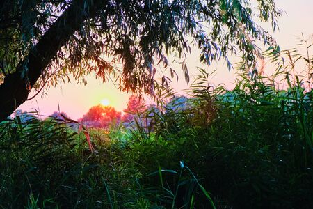 Sunset Sunrise In Spring Coniferous Forest Trees. Nature Woods. Reklamní fotografie