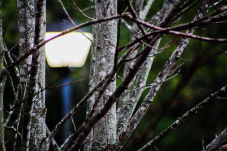Blurred Light Pole