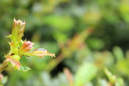 kropla deszczu: Raindrop on leaf Zdjęcie Seryjne