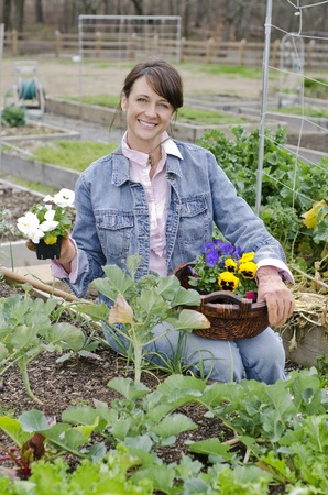 pansies: Woman preparing her garden for early Spring planting
