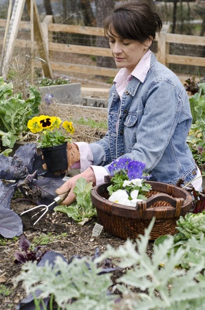 woman planting Spring flowers in her garden photo