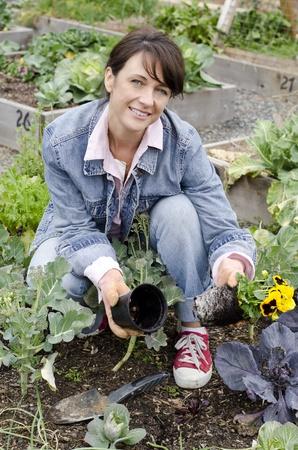paillis: jardinier femme tirant fleurs sur un pot Banque d'images