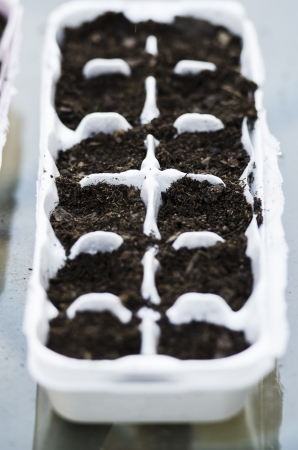 egg carton: close up of an egg carton prepared for seed growth