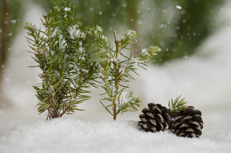 Two pine cones in the falling snow Stock Photo