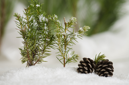 Two pine cones laying in the snow