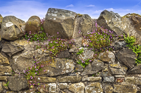 Dry Stone Wall,Blue Sky Purple Flowers photo