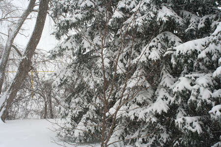 Snow covered trees photo