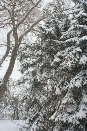 Snow covered trees Reklamní fotografie