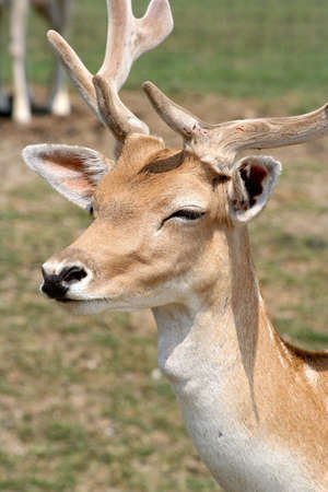 Image of a deer photo