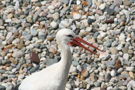 Bird in the wild 版權商用圖片