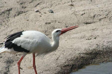 Exotic bird in nature 版權商用圖片