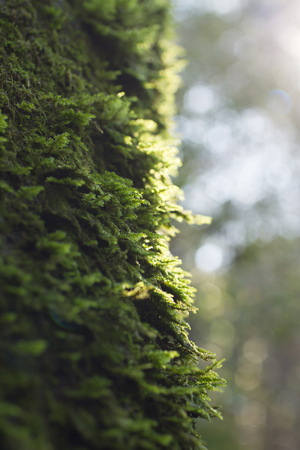 sunspot: Moss on a tree Stock Photo